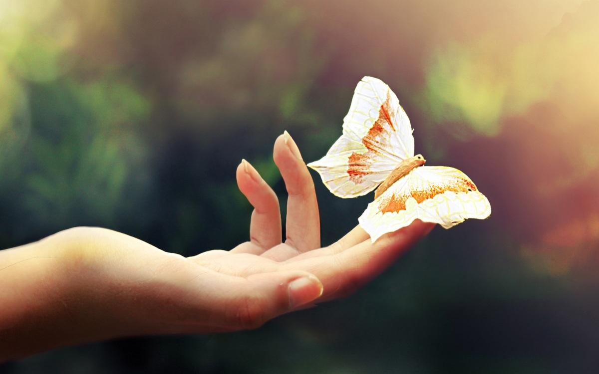 Butterfly Goo